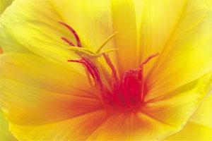 Die Vorstellung einer sich öffnenden Blüte kann bei der Geburt helfen, Kontraktionen in eine positive Energie zu verwandeln